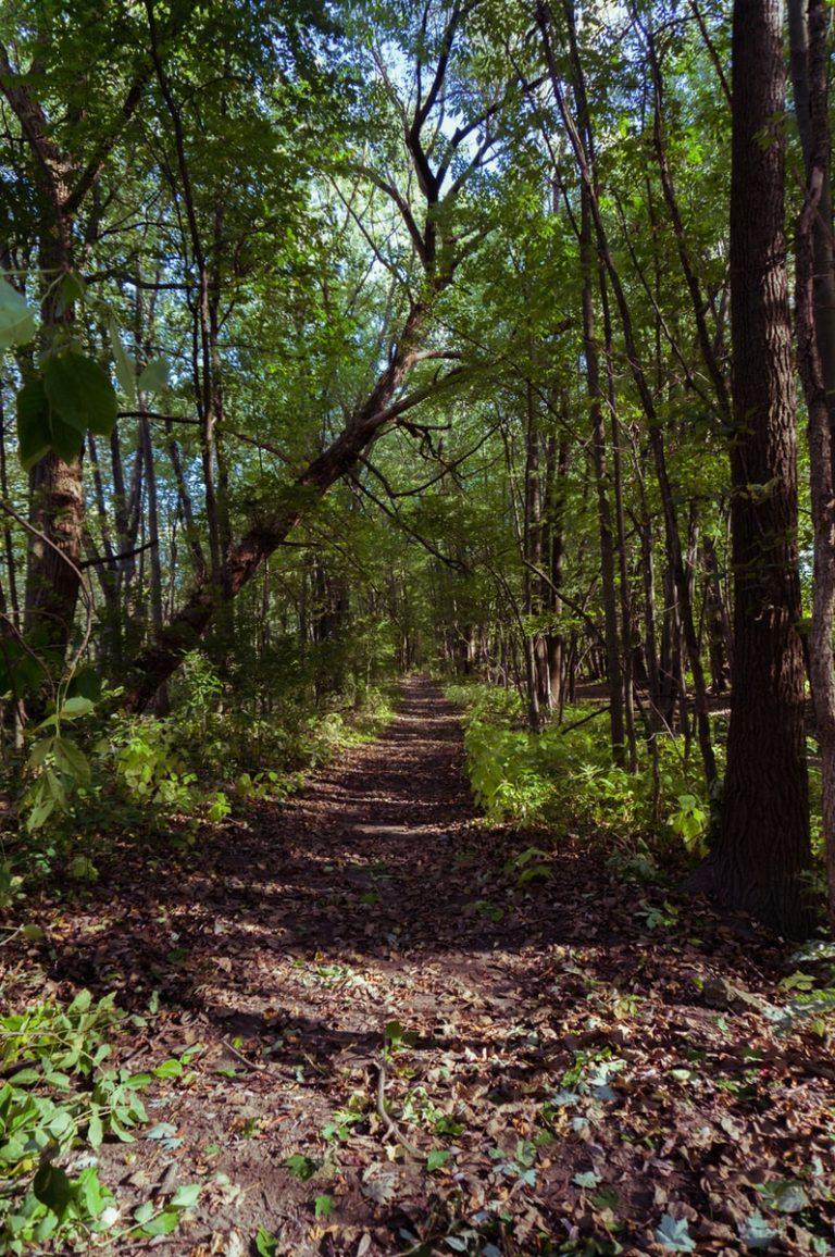 narrow road between green trees